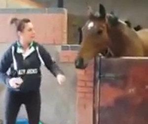 Cavallo inizia a ballare