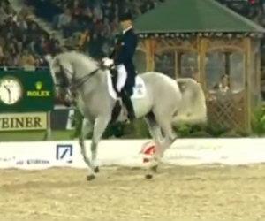 Un cavallo stupendo scende in pista e lascia tutti a bocca aperta