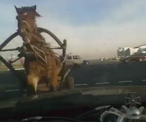 Cavallo travolge un'auto al semaforo