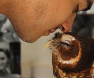Civetta adora essere coccolata