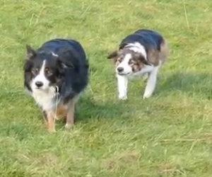 Vedono i cani muoversi in maniera assurda, ecco cosa succede