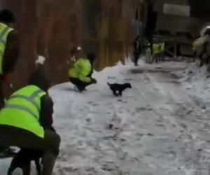 Combattere i ratti con i cani
