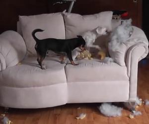 Cosa fanno i cani quando sono a casa da soli?
