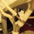 I gatti gli stavano rovinando tutti i mobili, ecco cosa si è inventato