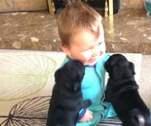 Questi due cuccioli non hanno mai visto un bambino