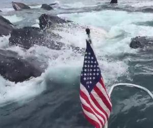 Sta filmando i gabbiani, ad un tratto decine di balene si avvicinano