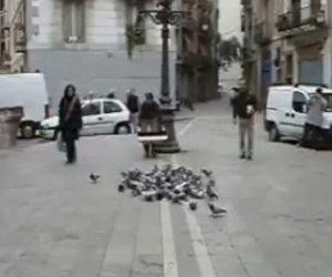 Dichiarare guerra ai piccioni