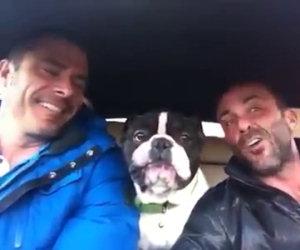 Due amici ed un cane cantano insieme