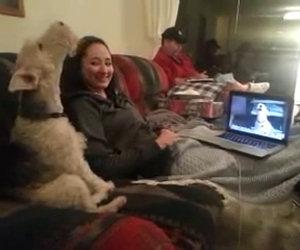 Due cani sono in videoconferenza su Skype, da non credere!