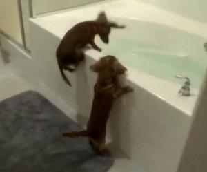 Due cani vogliono fare il bagno