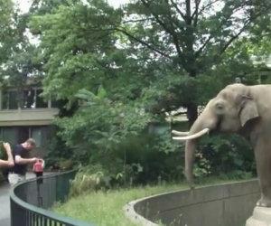 Elefante si vendica con i turisti