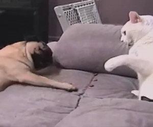 L'eterna lotta tra cani e gatti in una divertentissima compilation