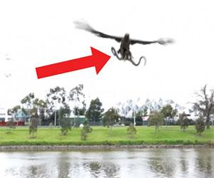 Un falco gioca un brutto scherzo ad una famiglia, ecco cosa fa...