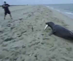 Foca ruba ad un pescatore