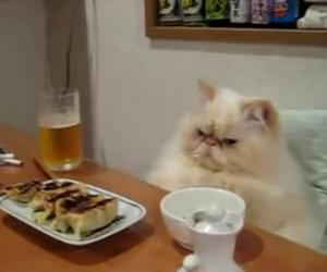 Gatti che si comportano come umani