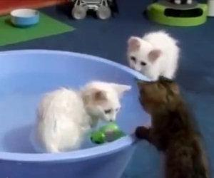 Questi gatti hanno una passione incredibile, lo immagineresti mai?