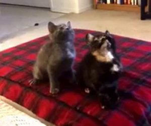 Gattini danzano a tempo