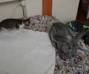 Gattino vuole tante attenzioni