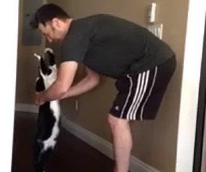 Gatto chiede un abbraccio