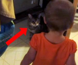 Il gatto discute con la sua piccola padroncina