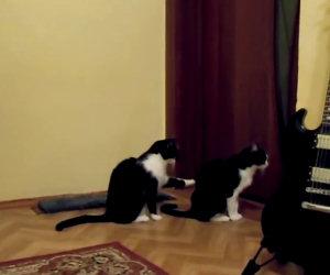Gatto prova a chiedere scusa