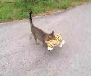 Il gatto va dal vicino di casa e ruba un giocattolo, ecco perchè...
