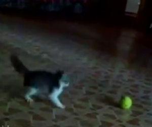 Il gattino entra nella stanza ed affronta una minacciosa palla da tennis