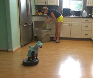 Gatto vestito da squalo fa le pulizie