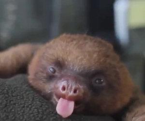Gli animali più dolci della terra