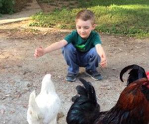 Il bambino chiede un abbraccio alla gallina, lei risponde in questo modo