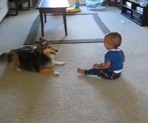 Il cane che gioca con un bambino