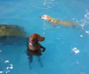 Il cane che non nuota