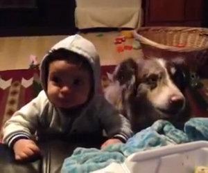 Dicono al bambino di chiamare la mamma, ecco cosa fa il cane