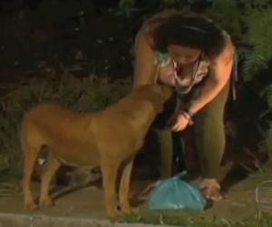 Seguono un cane nella discarica, ciò che sta facendo è incredibile
