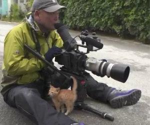 Il gattino si avvicina al fotografo, ciò che avviene dopo non ha prezzo