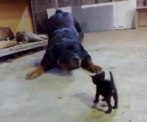Il gattino più coraggioso che ci sia