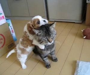Questo è sicuramente il gatto più paziente che abbiate mai visto
