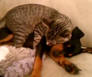 Il cane sta un po' male, ecco come il gatto si prende cura di lui
