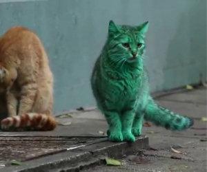Il gatto verde smeraldo