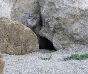 Il gattone sospettoso