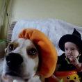 Cani e bambini giocano insieme in questa meravigliosa compilation