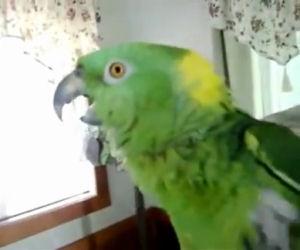 Inizia a filmare il suo pappagallo, ascoltate cosa dice poco dopo!