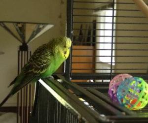 Il pappagallo che ama la musica dance