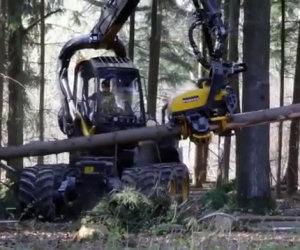 Il peggiore incubo di un albero
