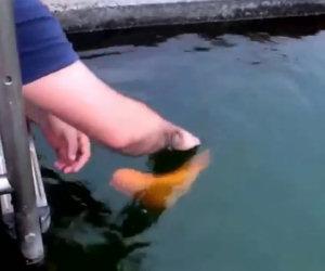 Il pesce più affettuoso del mondo