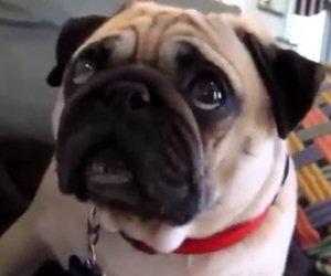 La compilation dei cani colpevoli