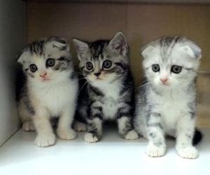 La danza dei piccoli gattini