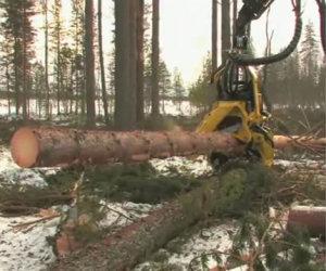 La macchina per tagliare gli alberi
