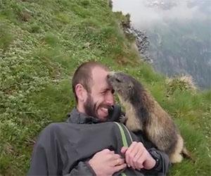 La marmotta più coccolona al mondo, ecco cosa fa all'alpinista