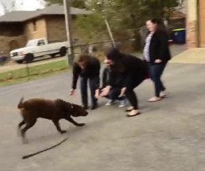Un labrador è stato rubato, ecco cosa fa quando rivede la sua famiglia